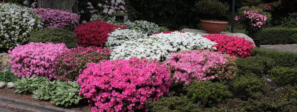 Japanische gartengestaltung nicht ohne rhododendron for Japanische gartengestaltung